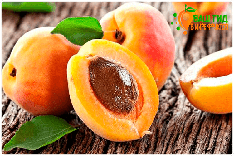 красивые абрикосы