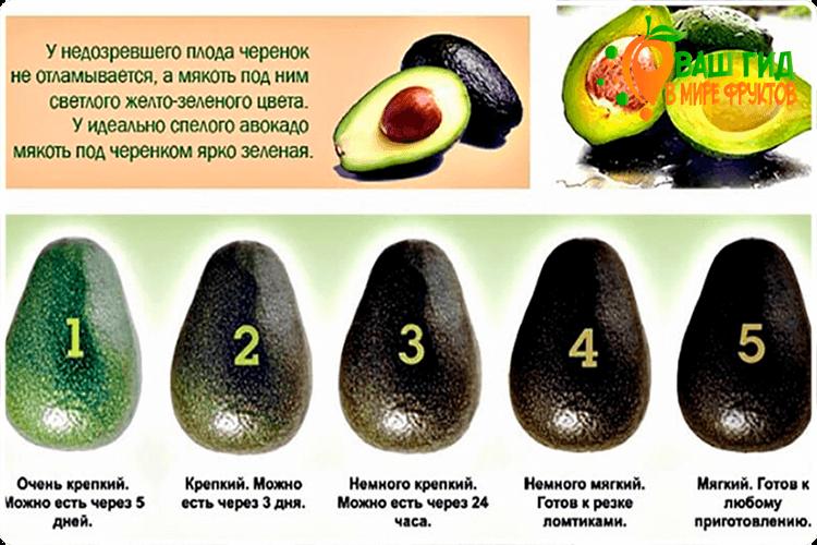 степени спелости авокадо