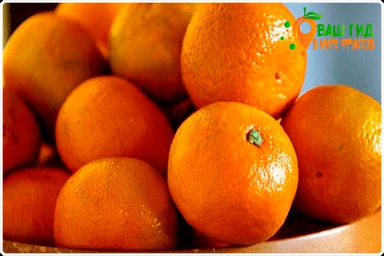 апельсин фрукт