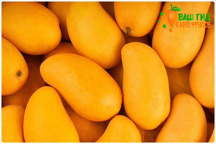 манго плод